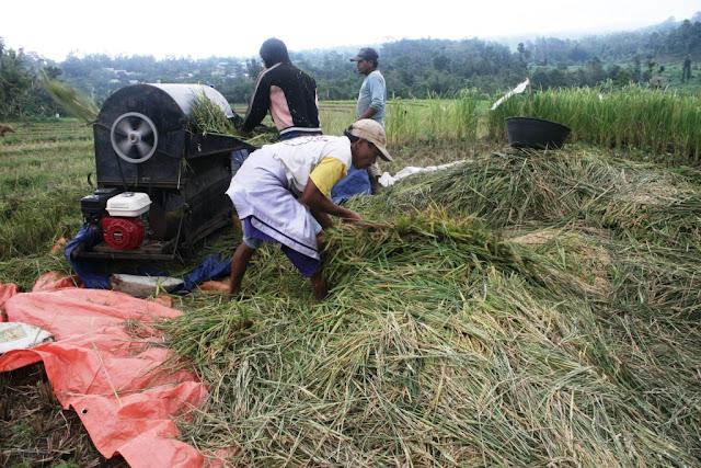 Pemerintah  Dinilai Gagal Lindungi Petani