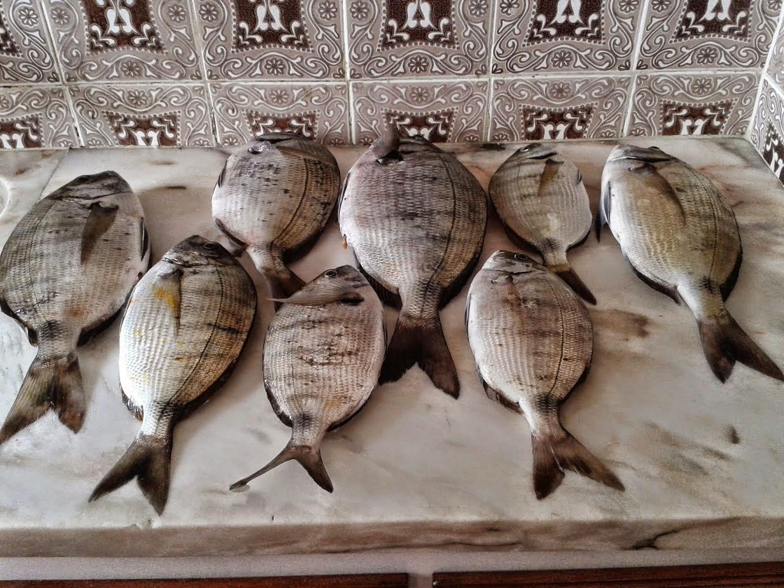 Pescaria do Mês (JANEIRO 2015 )