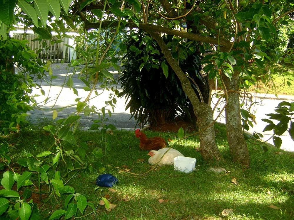Vila Santa Isabel, história de São Paulo, Zona Leste de São Paulo, galinhas, galináceos, parques, Vila Formosa, Vila Carrão