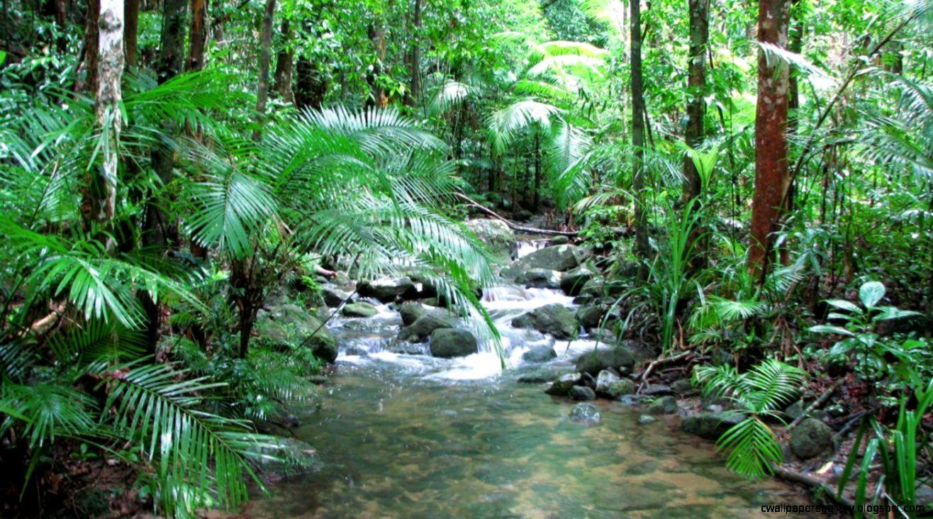 What are tropical rainforest landforms