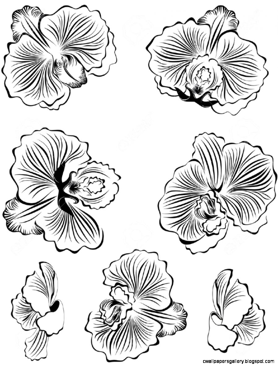 Set Of Black Flower Orchids Design Elements Royalty Free Cliparts