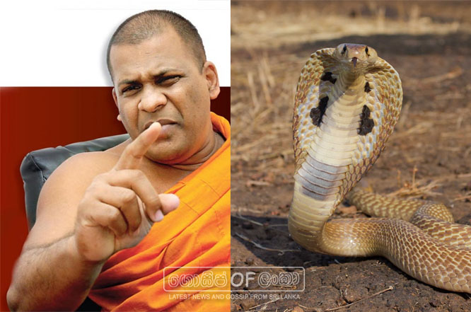 "Bodu Bala Sena to come from ""Snake"""