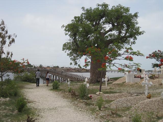 Baobab en el cementerio de Faiouth, Senegal