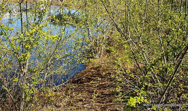 Nature corner. Lakeshore
