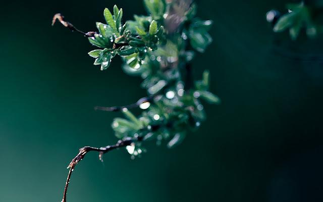 Hojas y Ramas Verdes