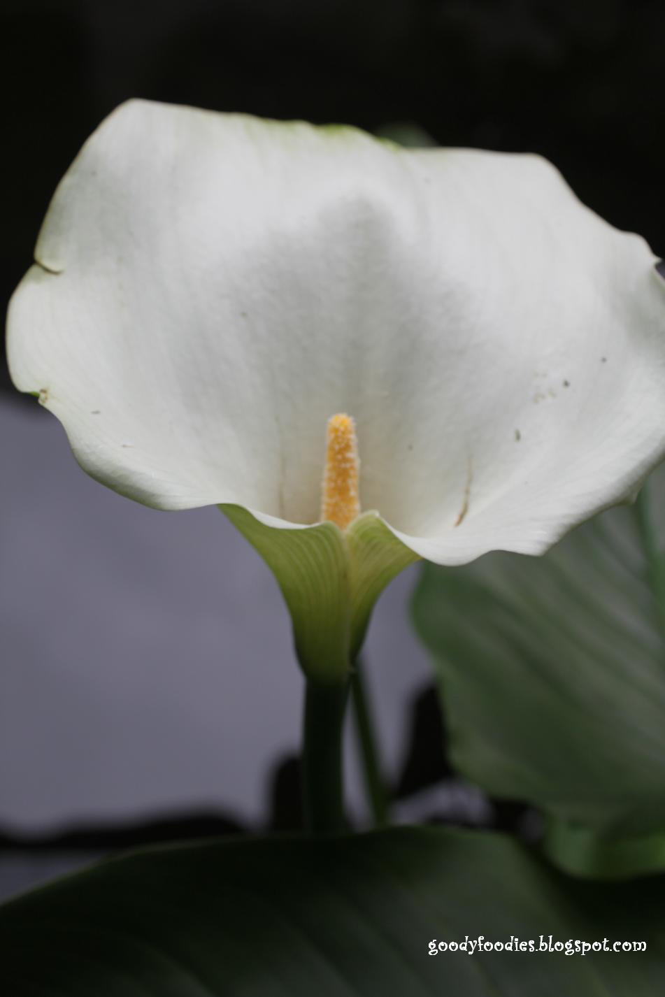 Lemon Lily Tea Room
