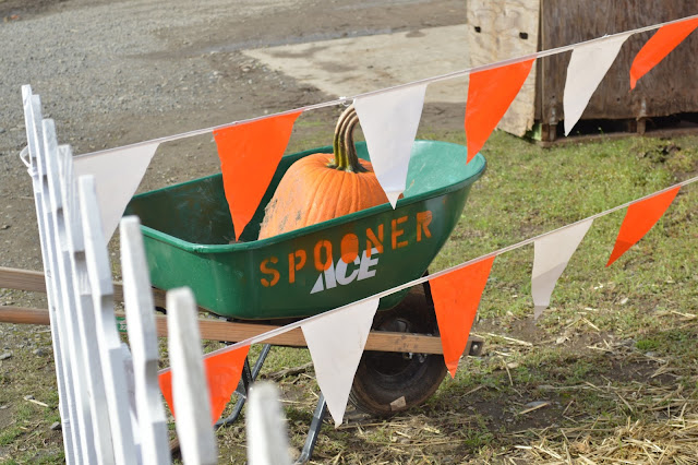 Spooner Farms, Pumpkin, Pumpkin patch, wheel barrel, pumpkin wheel barrel