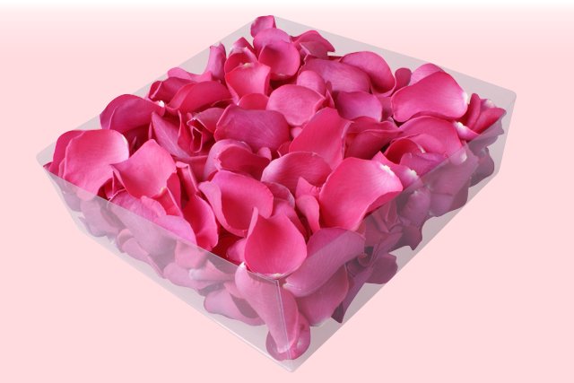 Hot pink rose petals wallpapers free download hot pink rose petals mightylinksfo