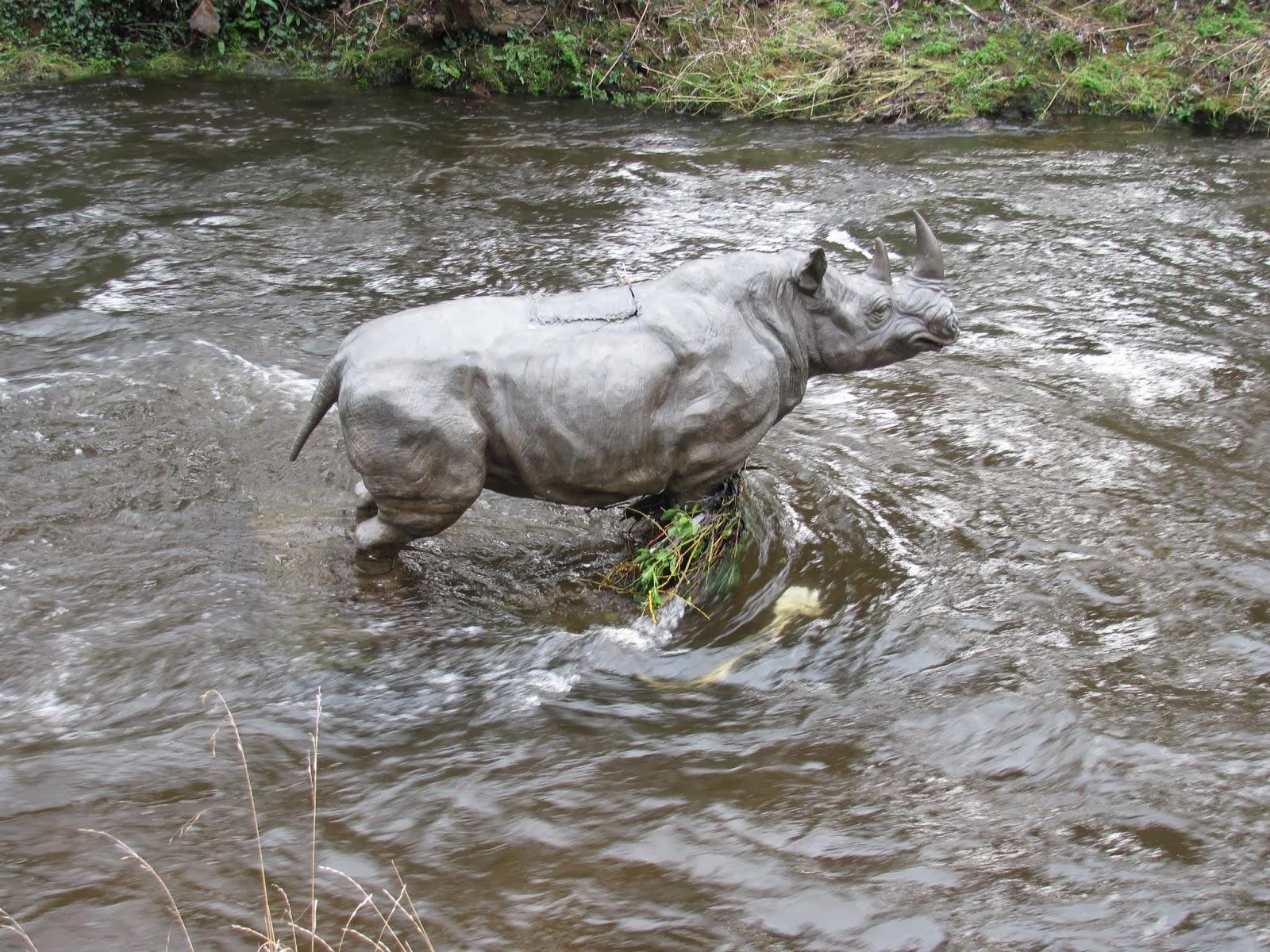 Dodder Rhino in Dublin