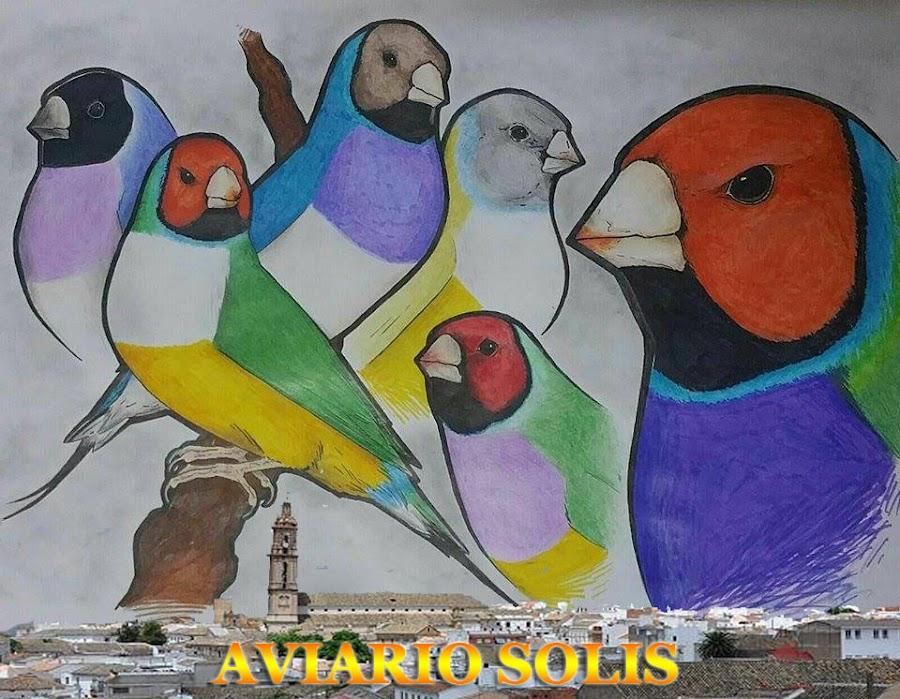 AVIARIO SOLIS