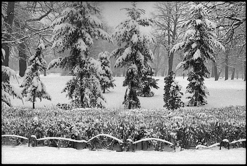 zima we wrocławiu, park kleciński, cz-b, wrocław, dokument, streetfoto