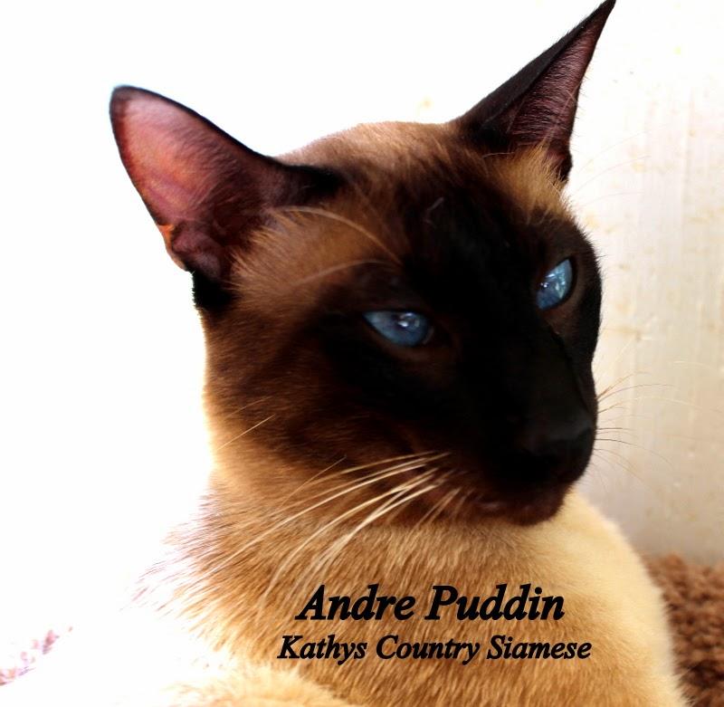 Andre Puddin