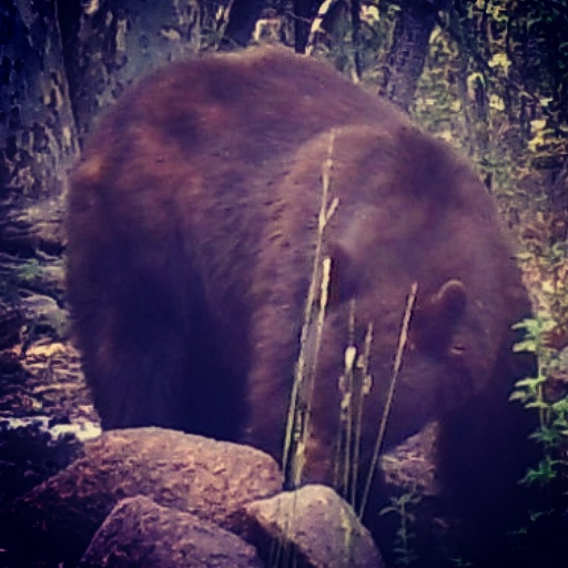 bear+1.png
