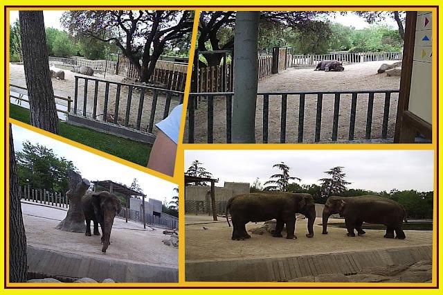 zoo relatos: