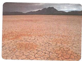 Existen numerosas causas por las que se contaminan los suelos. Un ejemplo son los contaminantes líquidos por desechos químicos que provocan que ya no sea fértil y viable para el cultivo, ocasionando la pérdida de vegetación por concentración de sustancias tóxicas.