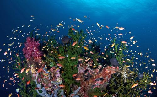 Masyarakat Misool Deklarasikan Zonasi Konservasi Laut
