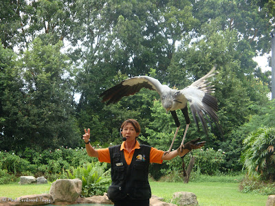 Jurong Bird Park - Kings of the Skies Show Photo 3