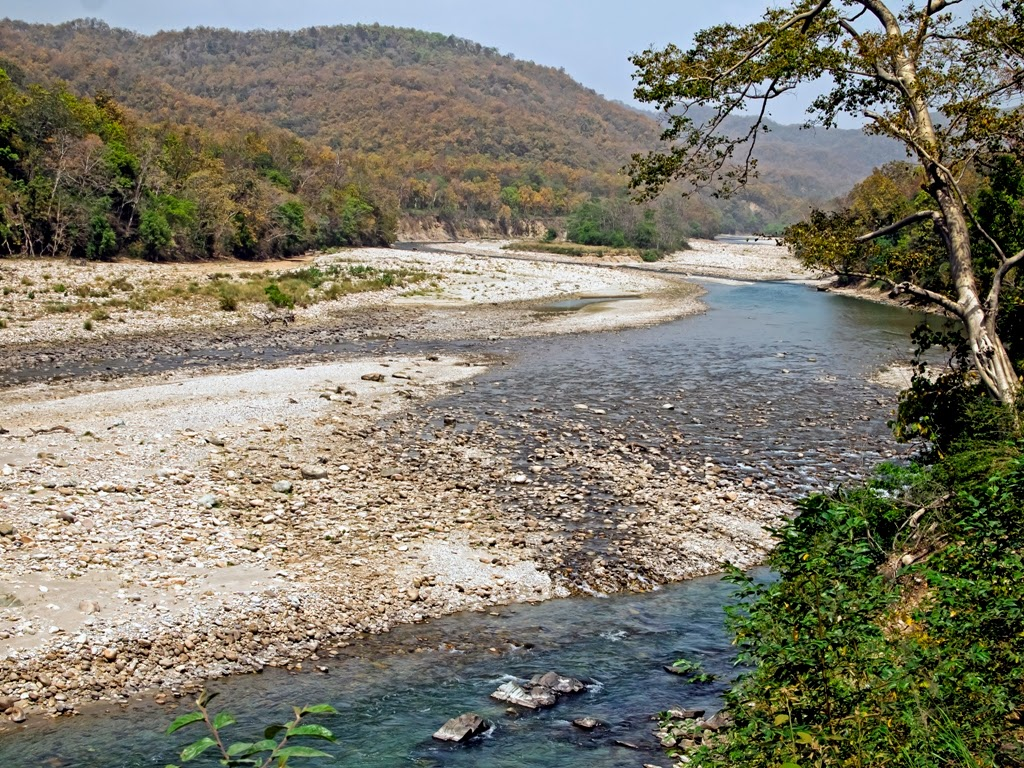 The Ramganga river: Jim Corbett National Park