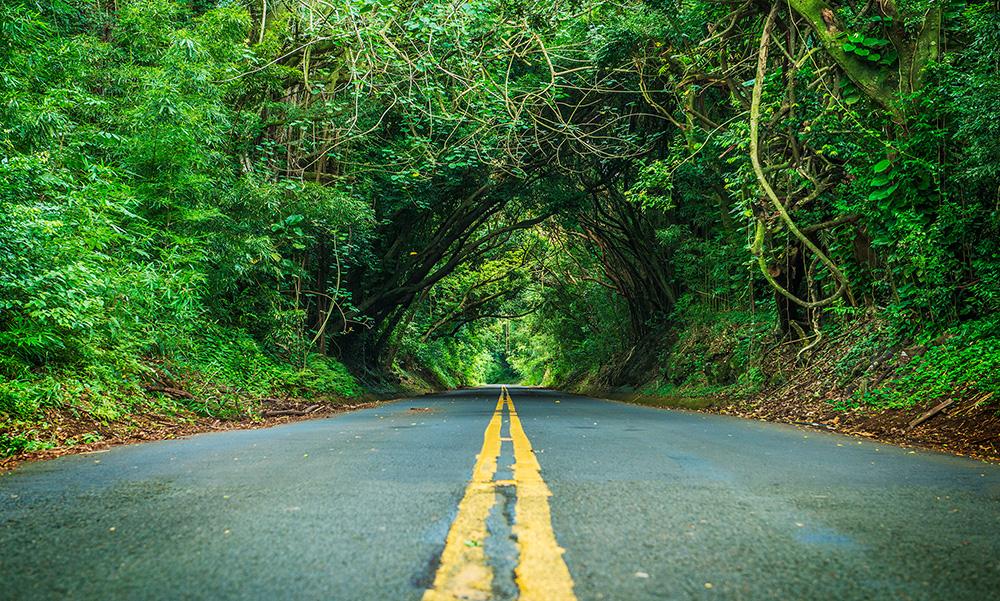 Honolulu, tree tunnel drive