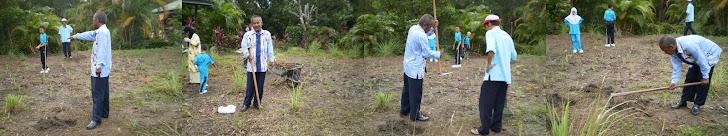 Projek tanaman semula serai fasa 2