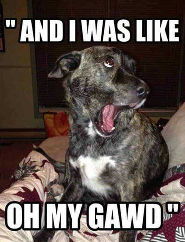 30 Funny animal captions - part 37, best funny animal captioned, animal pictures with sayings, animal meme, funny animal meme