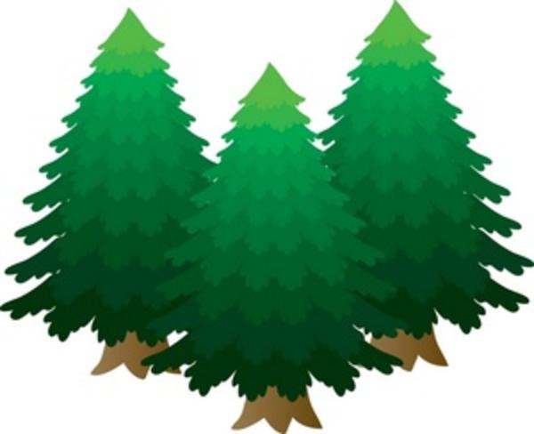 Gambar Pohon Pinus Kartun Lucu Pine Tree Cartoon Pictures Wallpaper