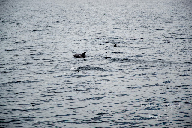 honeymoon-iceland-whale-dolphin group