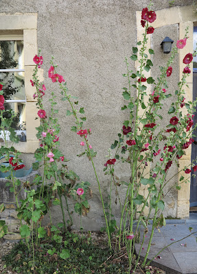 hollyhocks, vegan questhouse, organic, travel, Belgium, the Ardennes, ByHaafner