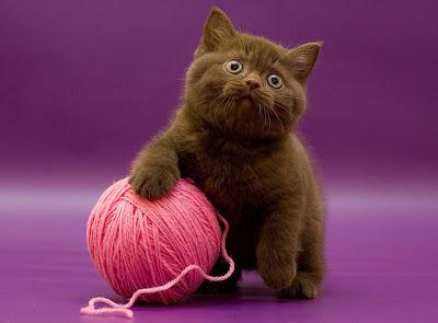Gatito jugando con una bola de estambre