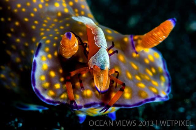 Лучшие фото конкурса Ocean Views 2013