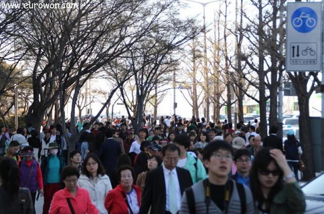 Muchos coreanos disfrutando de las flores de cerezo en Yeouido