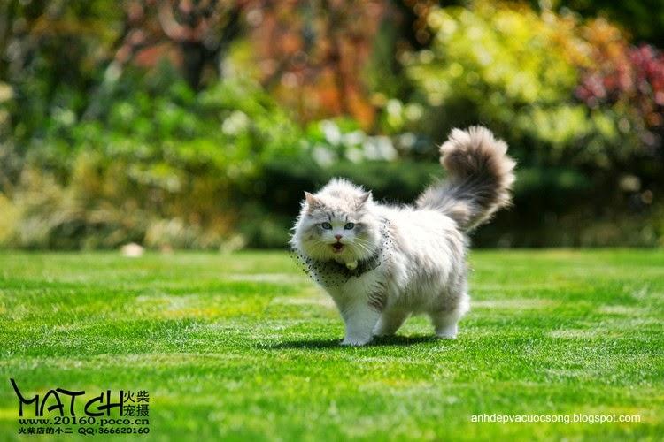 Tiểu thư mèo xinh đẹp 1