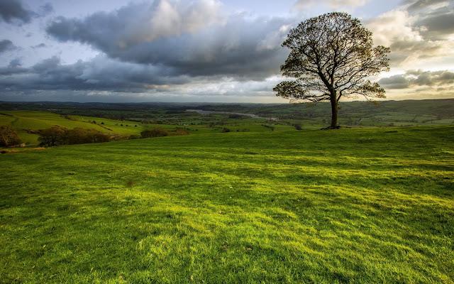 Árbol en Medio del Campo - Fotos de la Naturaleza