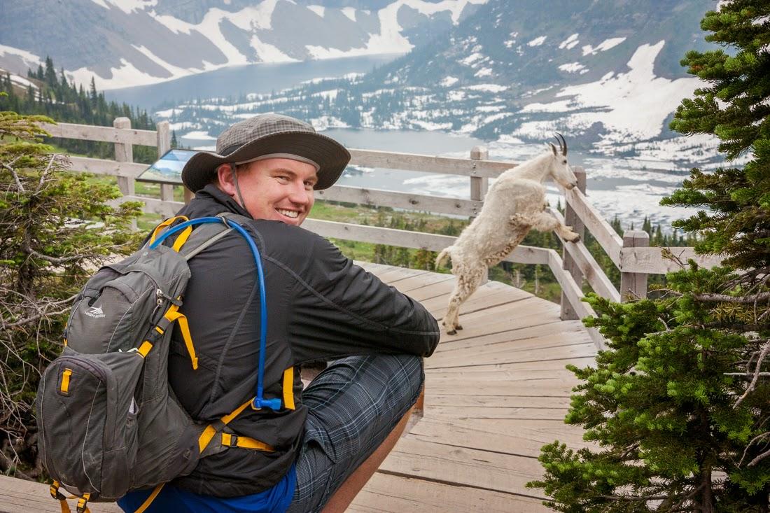 goats, wildlife, glacier national park