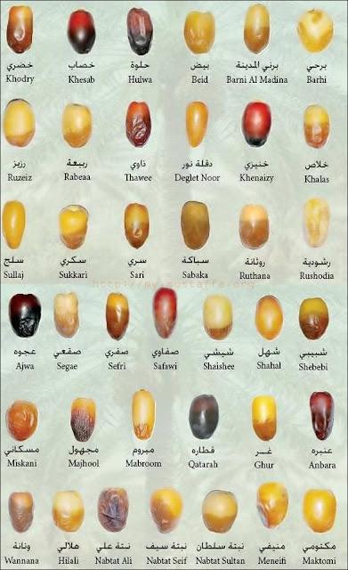 jenis-kurma-types-dates-ramadhan-puasa-nabi