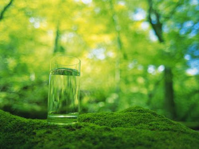 wild glass cup greenish hd wallpapers