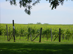 Yes, there are Vineyards in Kansas!