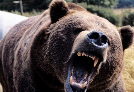 A Bear Walks Into A Bar... Seriously!