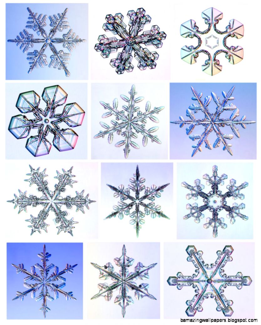 real snowflake under microscope   Google Search  snowflake