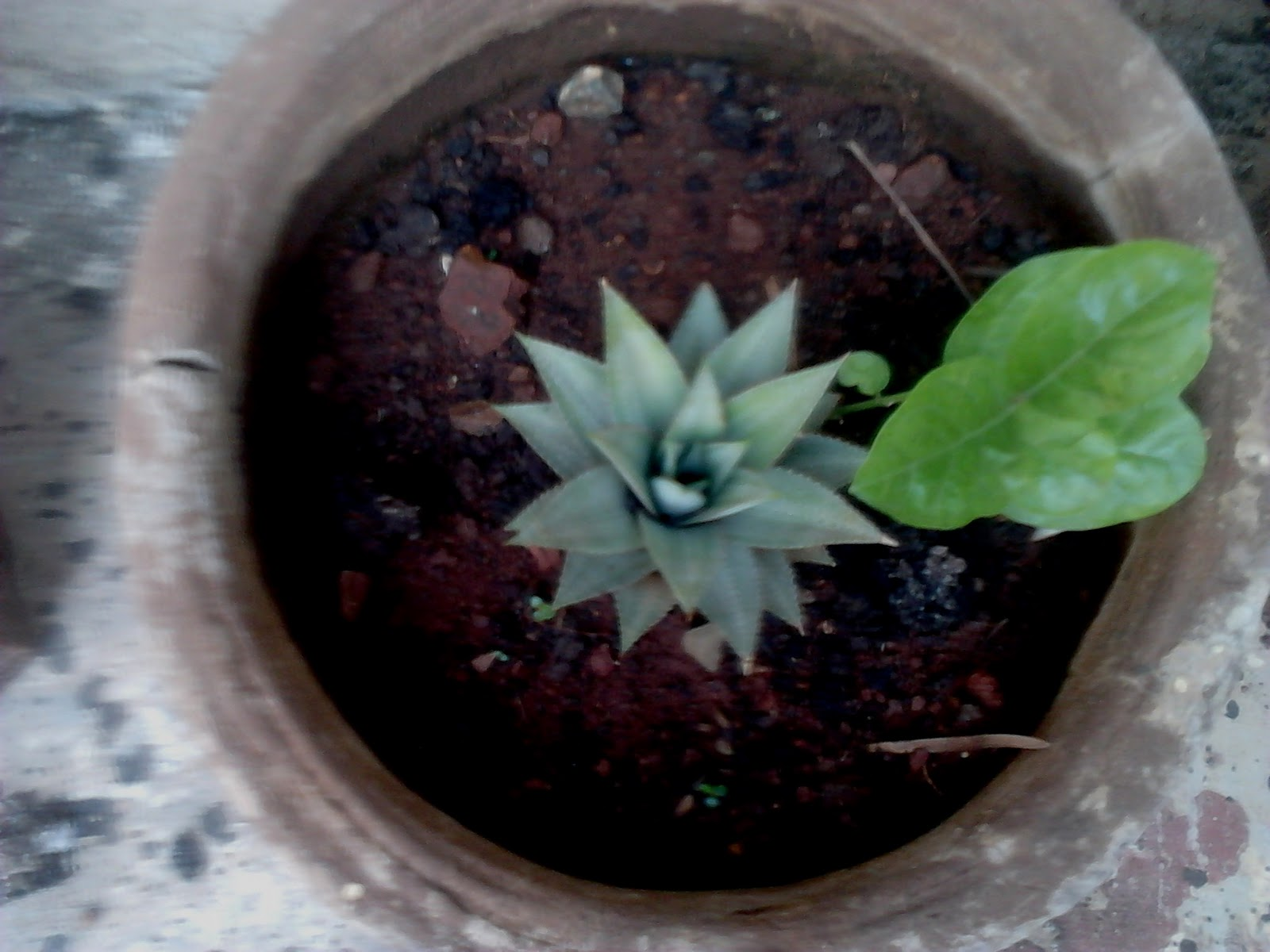 Easy Gardening Tips for Growing a Simple Garden Garden Care Simplified: Flower Shaped Plant - Cactus Plant Growing ...