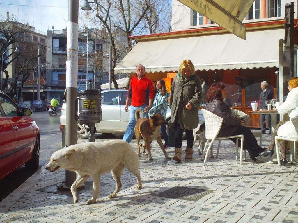 Όπου κι αν πας αδέσποτα σκυλιά