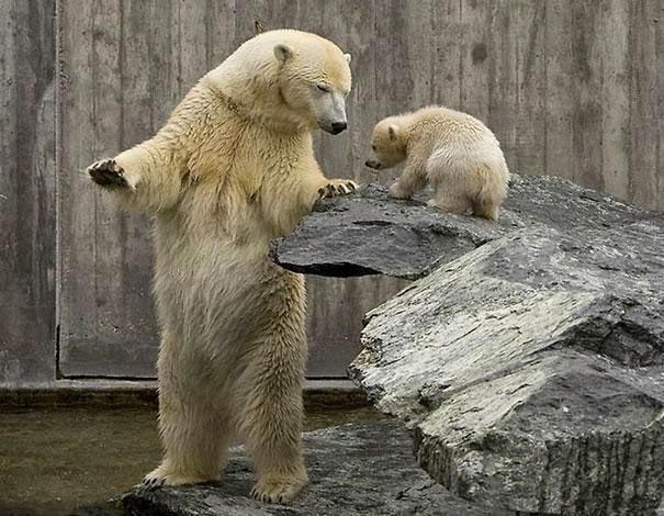gambar beruang lucu - gambar beruang - gambar beruang lucu