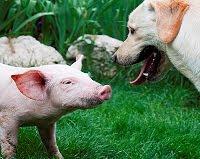 Asociación Animalista:LIBERA