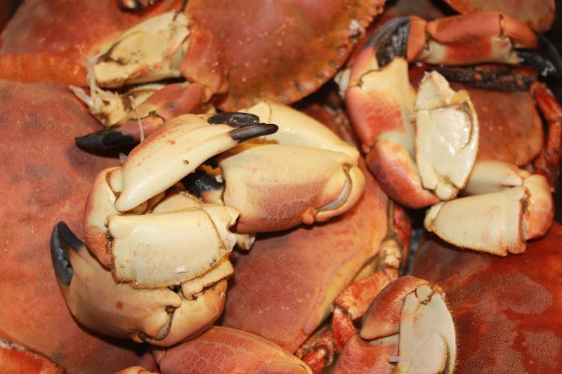 levende krabber bergen