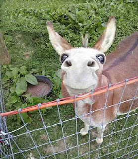 Strange looking donkey