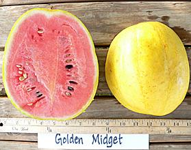 golden midget watermelon