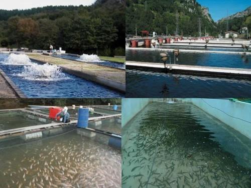Piscicultura recomendaciones para el manejo de estanques for Cria de mojarra en estanques