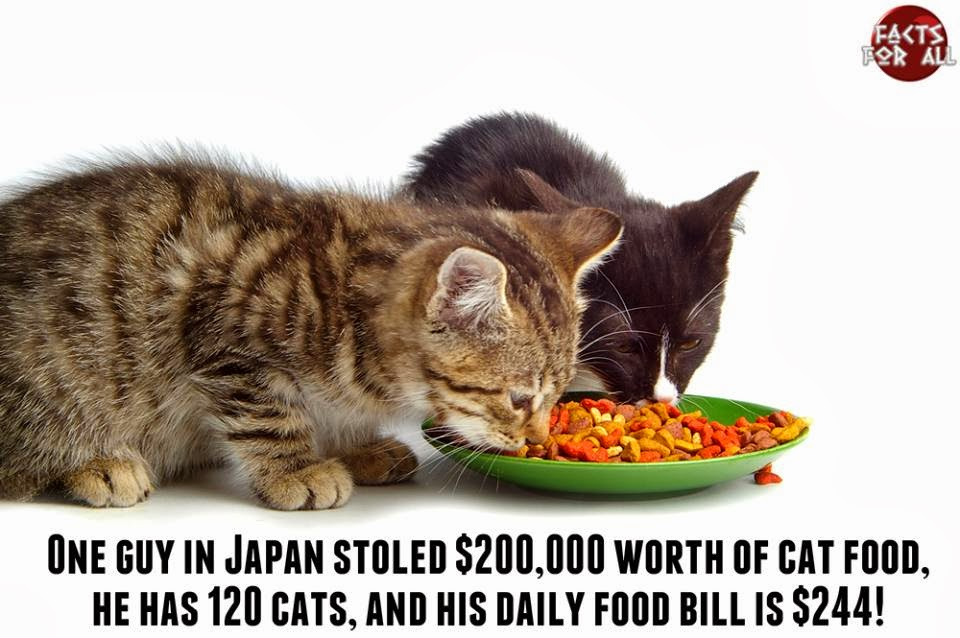cats eating food