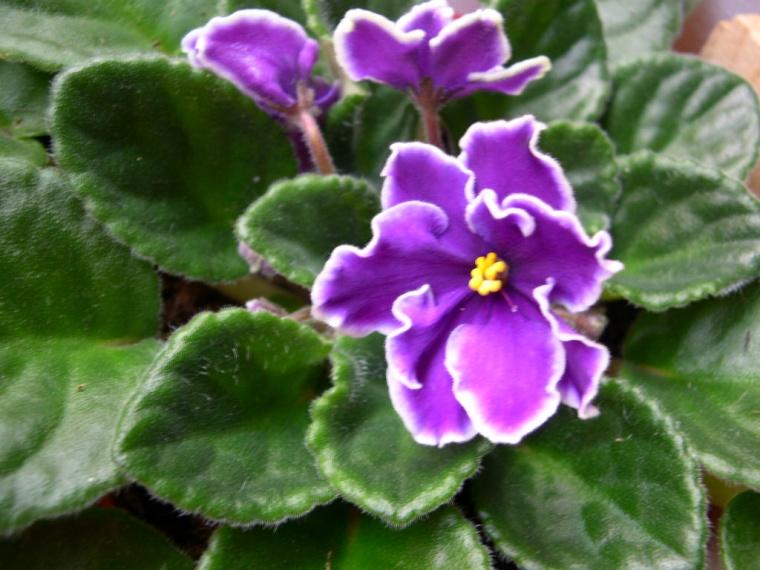 plantas e jardins plantas flores e jardinagem o