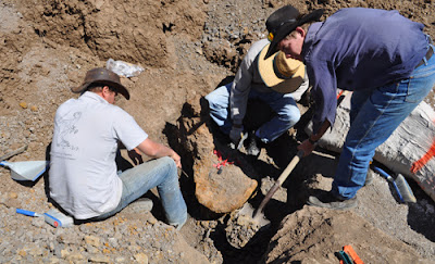 Large dinosaur bones found in Qld, Australia